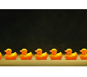 Picture of ducks lined up in a row